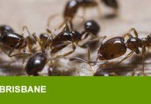 ant treatment near me