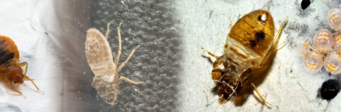 bed bug specialist near me