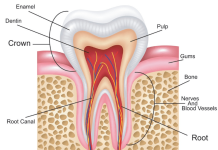 tooth root canal-min